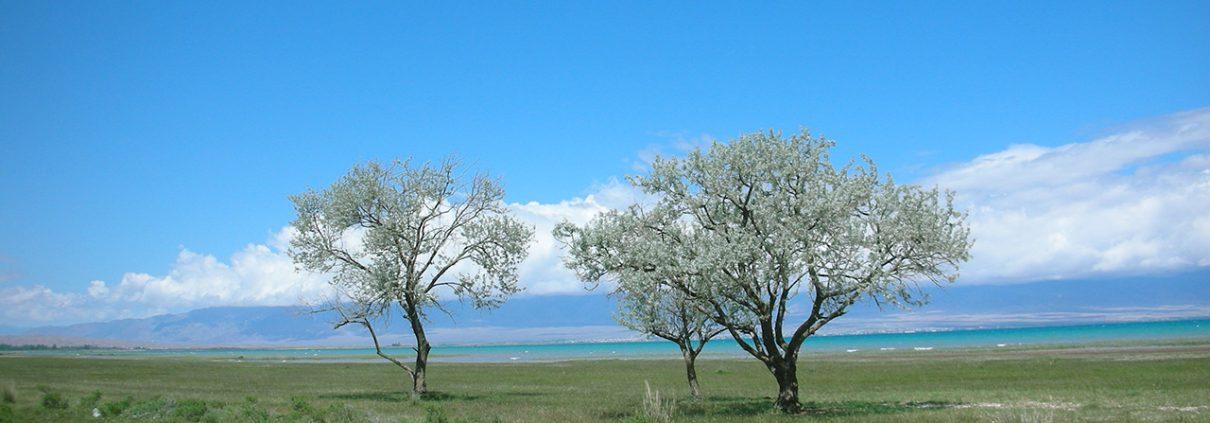 Astrid Scheld: Wiese Wasser Entspannung Natur Landschaft