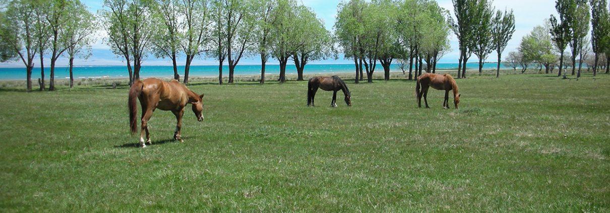Astrid Scheld: Wasser Entspannung Natur Landschaft Wiese Pferde